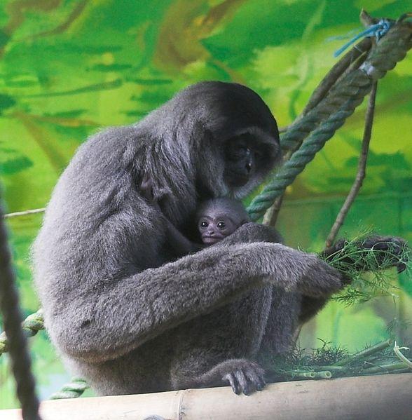 Portadores primates